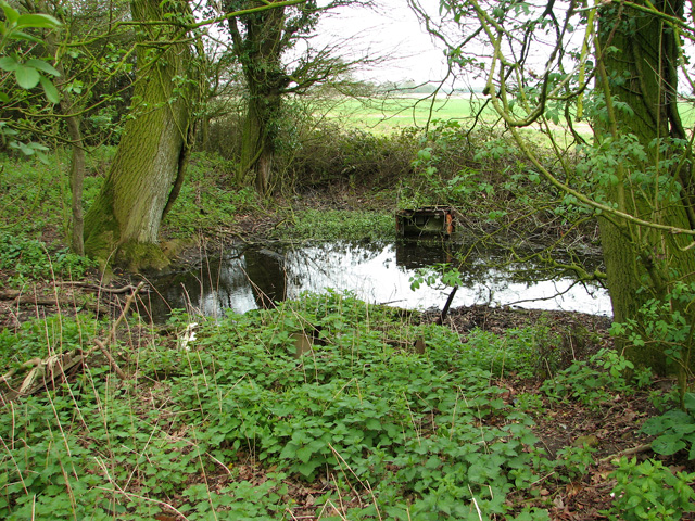 Small pond beside the footpath, Wood Green