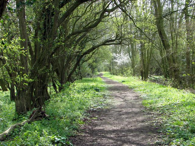 Through Crow Green on Boudica's Way