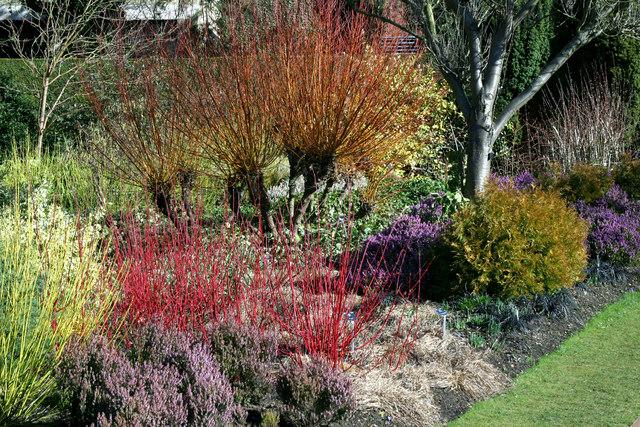 The winter gardens at Cambridge University Botanical Garden
