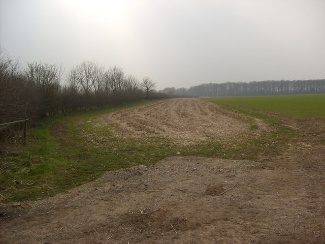 Field Boundary towards Gravelwalk Plantation