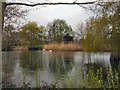 TQ1731 : Horsham Park Pond by Paul Gillett