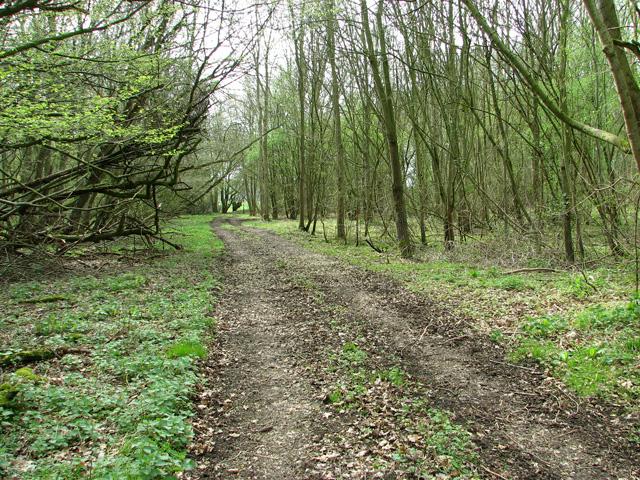 Track in Middle Wood, Upper Billingford