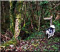 SN0718 : Directions to Holgan Camp by Deborah Tilley
