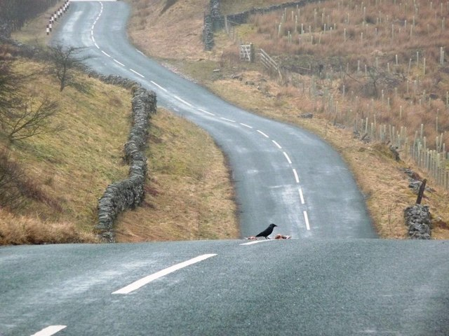 Roadkill on the B6259