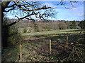 NZ1657 : Woodland scene from the Derwent Walk by Robert Graham