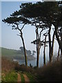 SW7727 : Monterey pines on the Helford River by Rod Allday