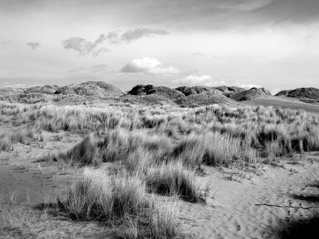 Forvie: sand dunes and Marram Grass