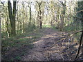 NZ2555 : Urpeth Wood by brian clark
