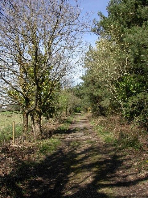 Avon Heath, bridleway