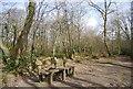 TQ7811 : Bench in Church Wood by N Chadwick