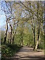 TQ2888 : Highgate Wood in early April (2) by Stefan Czapski