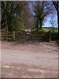 SU8414 : Bridleway on Colworth Down by Shazz