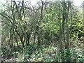 SE7737 : Woodland beside Rail Trail by JThomas