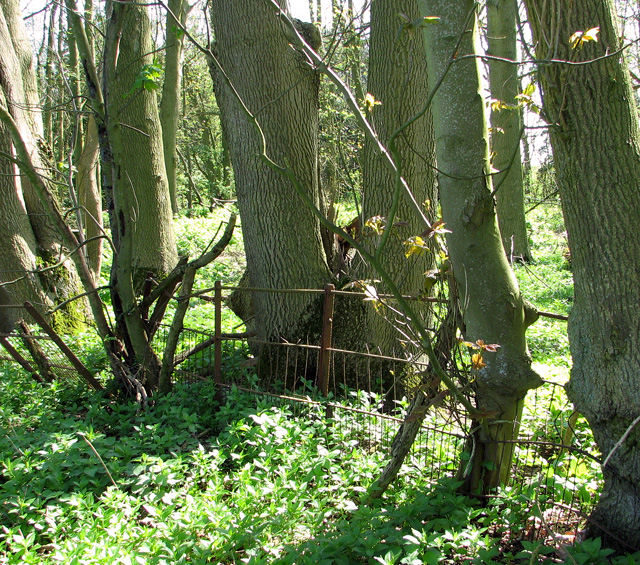 Remains of an old iron fence, Arminghall