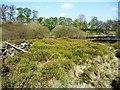 SE2104 : Bilberry patch, Royd Moor reservoir by Christine Johnstone