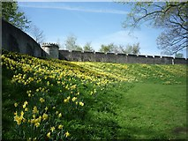 SE6052 : City walls in Spring by DS Pugh