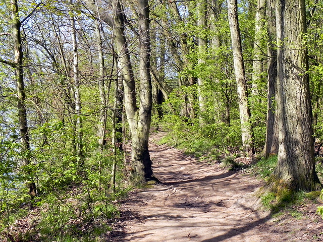 Wooded Path, Sale Water Park