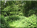 TQ3765 : Spring Park Wood by Mike Quinn
