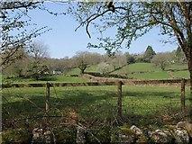 SX7070 : Fields at Hannaford by Derek Harper