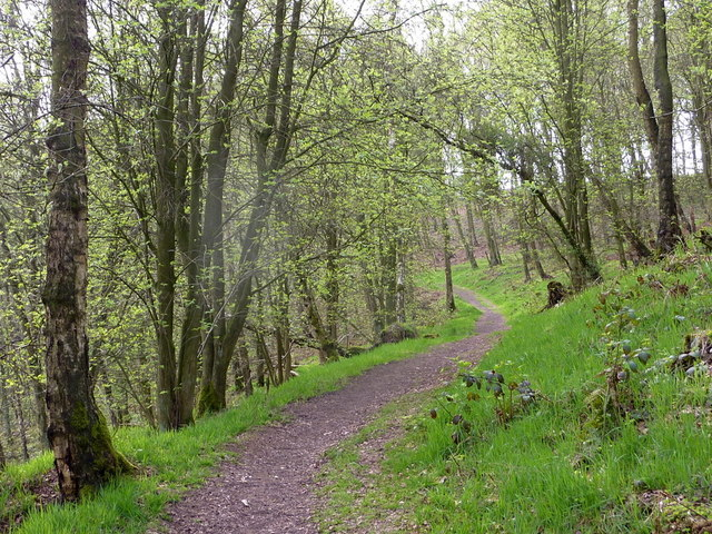 Woodland footpath in the spring