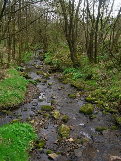 Stream in Walker Fold Woods