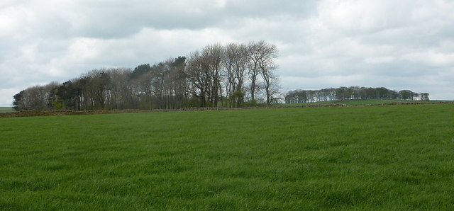 Open upland pasture with lines of trees