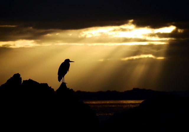 Heron silhouette, Bangor