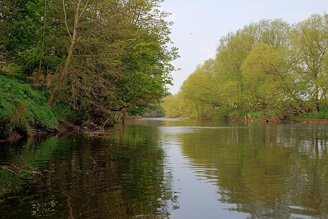 River Tees near Beverley Wood
