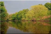 NZ3510 : River Tees near Over Dinsdale by Mick Garratt