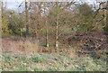 TQ2294 : Small pond, Totteridge Fields by N Chadwick