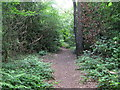 TQ3765 : Footpath into the wood east of Oak Avenue, CR0 by Mike Quinn