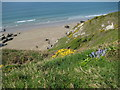 SX3852 : Above Sharrow Cliff by Philip Halling