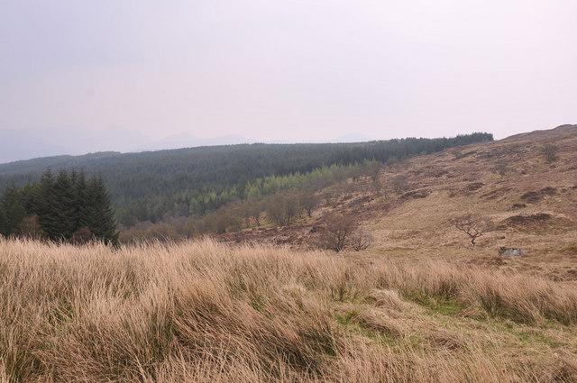 Edge of the moorland near Liddesdale