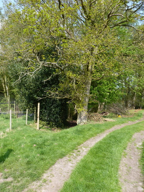 Footpath into the woods - Honeypot Coppice