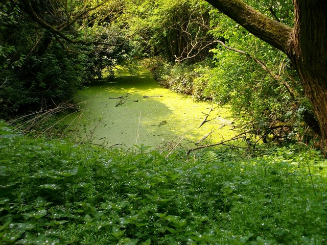 Pond covered with green algae