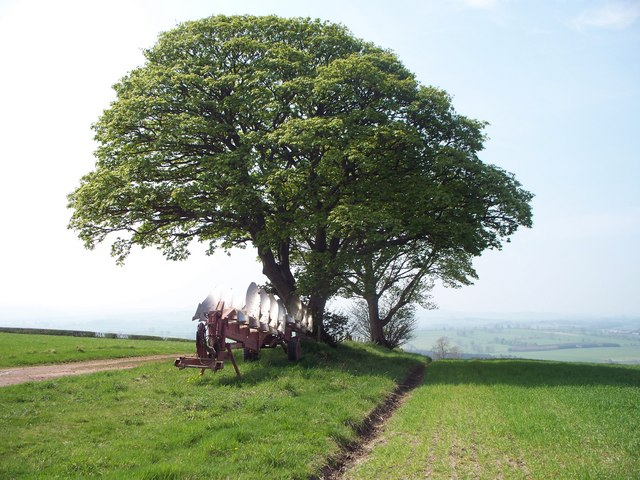A Plough under a pair of trees