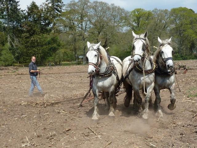 Harbridge Heavy Horse Event 2011