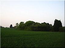 TM1763 : The nearest Debenham came to having a railway line by Chris Holifield