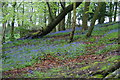 SD6523 : Bluebell woods near Higher Whitehalgh Farm by Bill Boaden