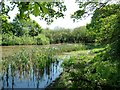 TL0335 : Pussy Pond by Paul Buckingham