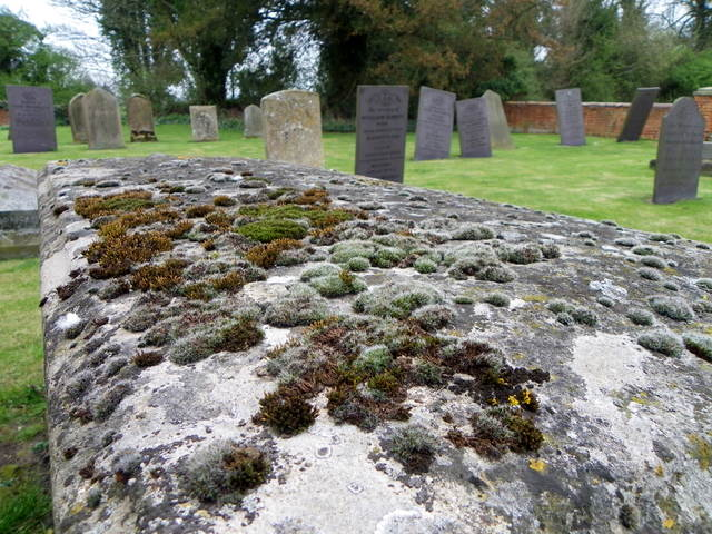 Lichen, Gravestone at St Denys Church