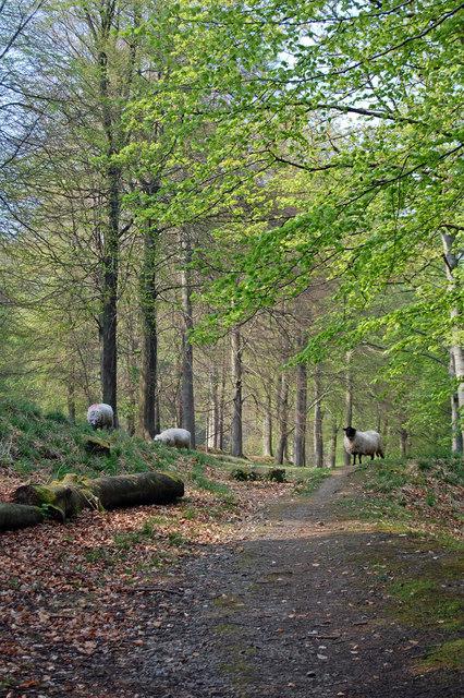 Hope Woodlands : Birchinlee