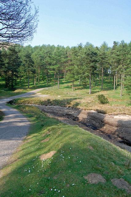 Hope Woodlands : Linch Clough
