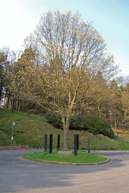 Hope Woodlands : King's Tree