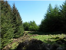 NS5077 : Forest break caused by stream by Stephen Sweeney