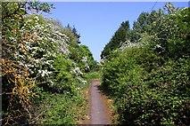 SU5894 : Footpath to Drayton Road by Steve Daniels