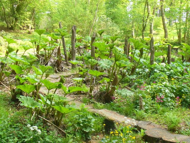 bog garden - Bog Garden