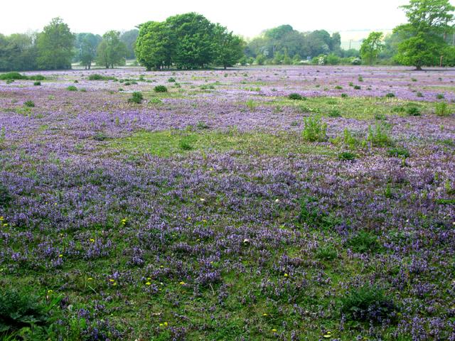 A stunning field of wild flowers