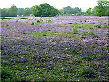 TR3153 : A stunning field of wild flowers by Nick Smith