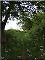 TM3258 : Hollow Lane Footpath to Keeper's Lane approaching Derek's Wood by Adrian Cable